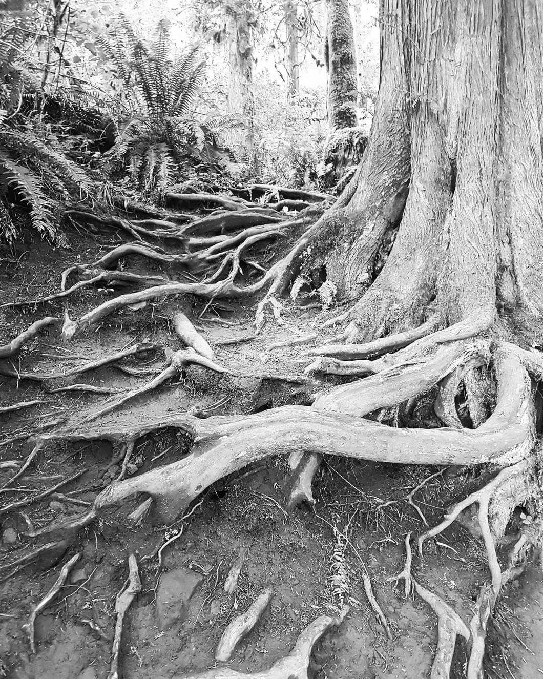 tree_roots_02