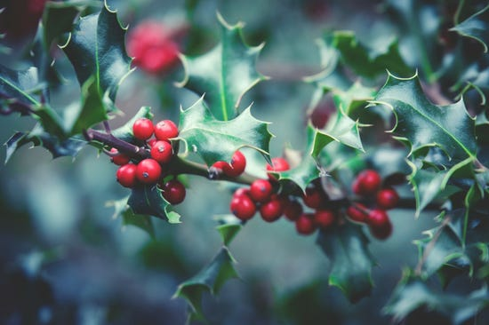 rowan_branch_berries-551740